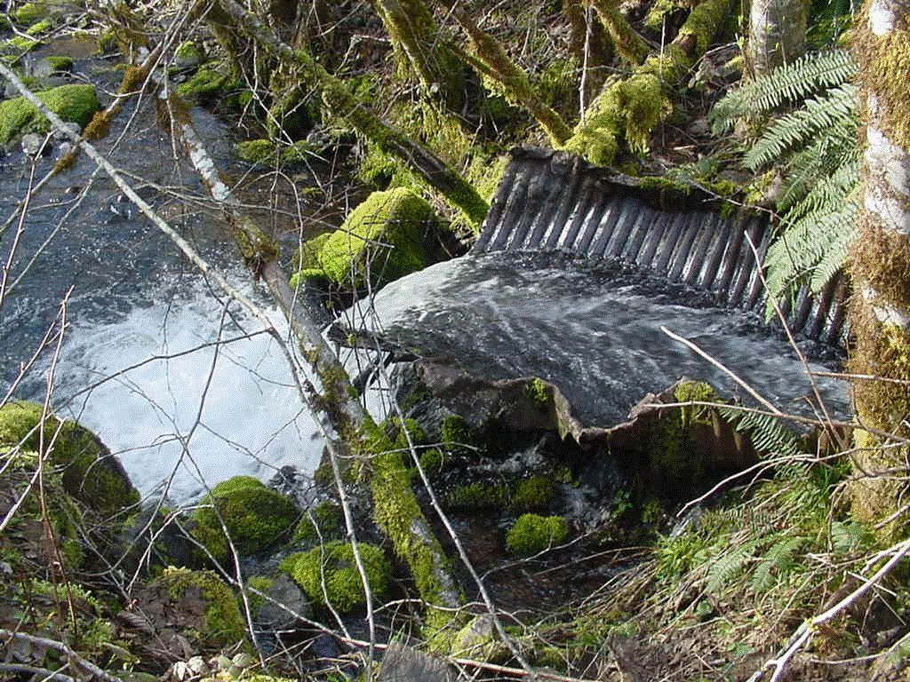 Perched culvert blocking fish passage from Wiley Creek